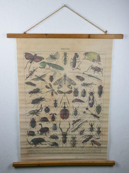 Insektenkarte